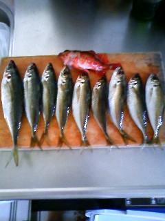 和歌山北港海釣り公園 001.jpg