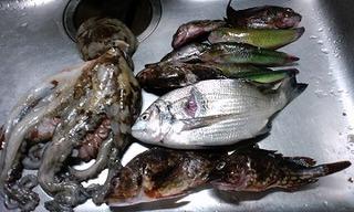 瀬戸内 魚つき 011.jpg