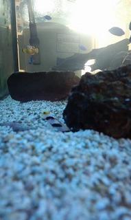 熱帯魚仲間 001.jpg