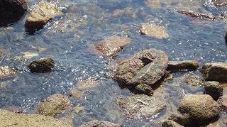 魚突き 瀬戸内 028.jpg